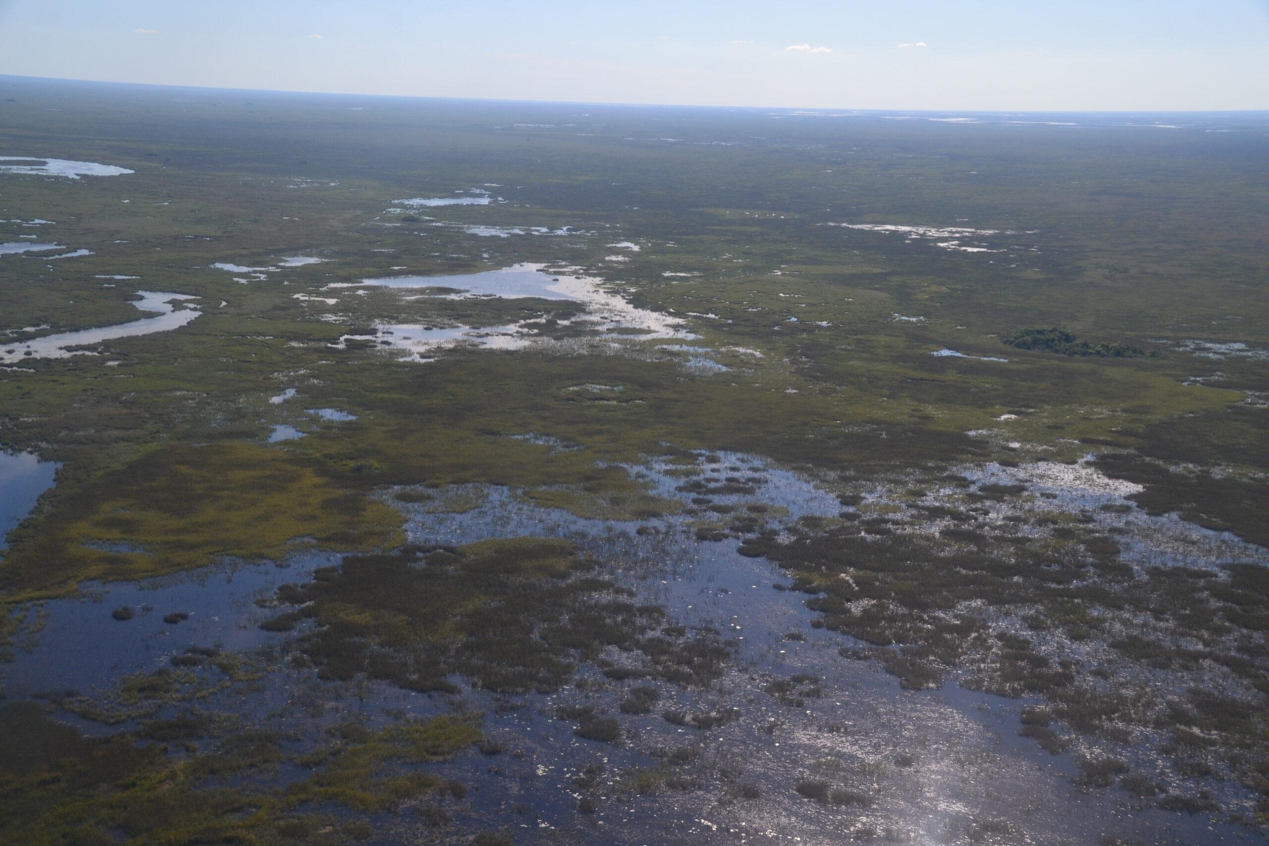 Esteros del Iberá: viaje por el humedal más grande de Argentina